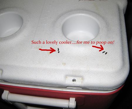 Poop on your cooler copy